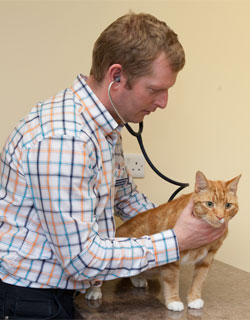 ennis-vet-clinic-pregnancy-advice-cat