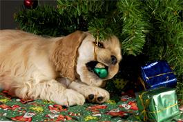 Pet Hazards Christmas Tree