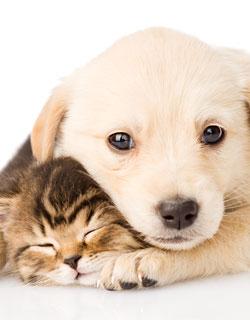 Canine Pregnancy Advice, Dog Pregnancy Advice, Dog Labour, Puppy