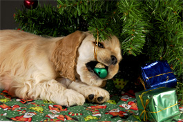 Pet Hazards Christmas Tree