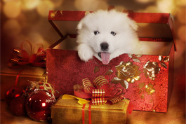 Pets Are Not Just for Christmas