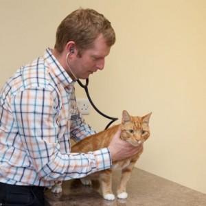 New Ennis Veterinary Clinic