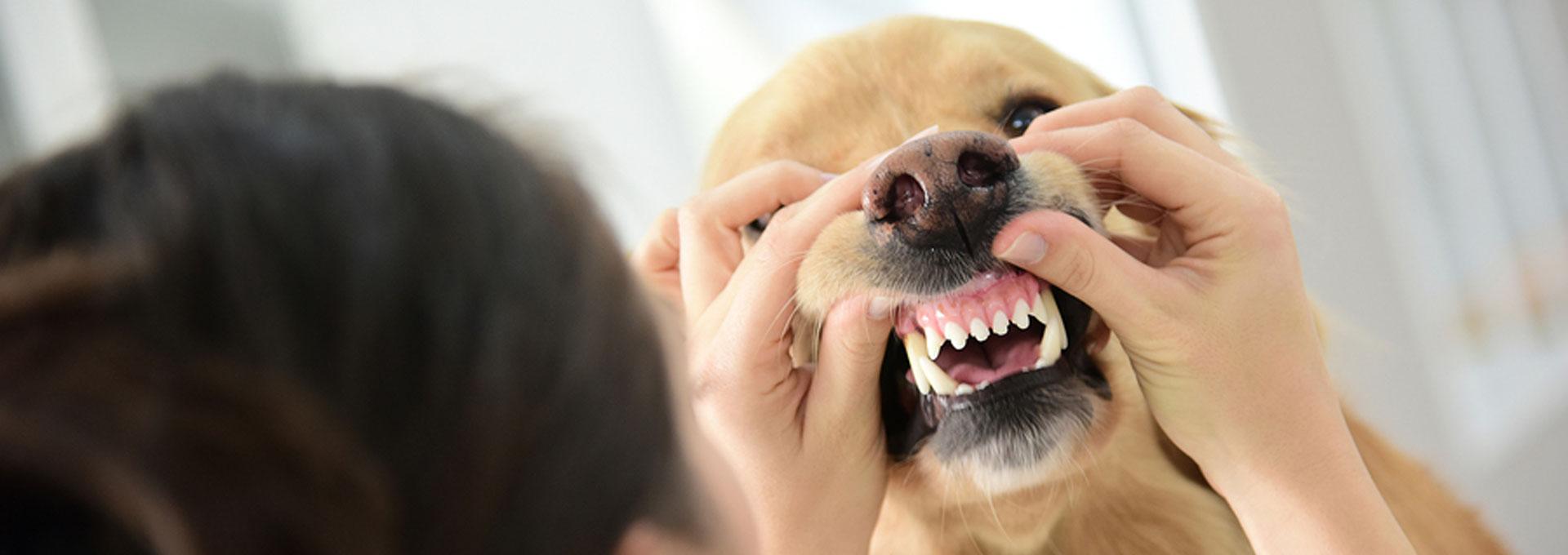 ennis-vet-clinic-dental-care-slider-04